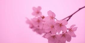 花の壁紙#46サムネイル