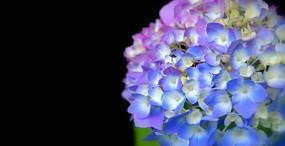 花の壁紙#48サムネイル