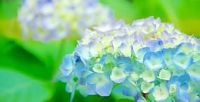 花の壁紙#49サムネイル