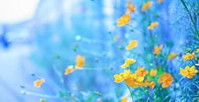 花の壁紙#5サムネイル