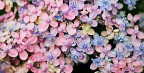 花の壁紙#51サムネイル