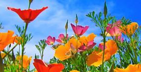 花の壁紙#52サムネイル