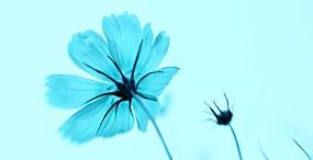 花の壁紙#53サムネイル