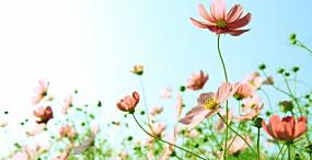花の壁紙#55サムネイル