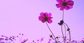 花の壁紙#56サムネイル