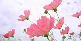 花の壁紙#57サムネイル