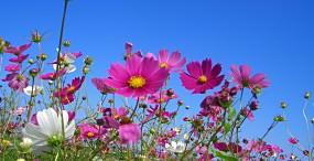花の壁紙#58サムネイル
