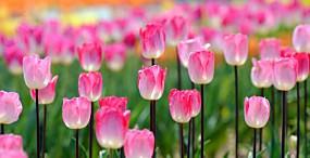花の壁紙#60サムネイル