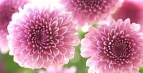 花の壁紙#61サムネイル