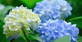 花の壁紙#62サムネイル