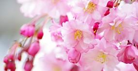 花の壁紙#64サムネイル
