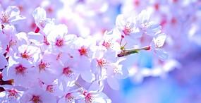 花の壁紙#65サムネイル