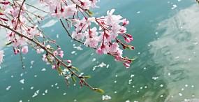 花の壁紙#70サムネイル