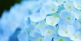 花の壁紙#71サムネイル