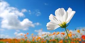 花の壁紙#80サムネイル