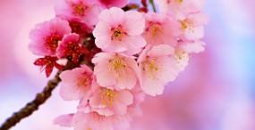 花の壁紙#82サムネイル