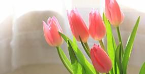 花の壁紙#86サムネイル