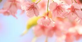 花の壁紙#87サムネイル