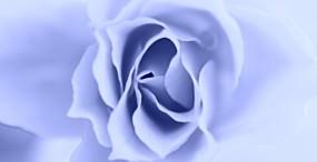 花の壁紙#89サムネイル