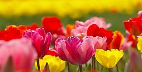 花の壁紙#91サムネイル