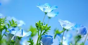 花の壁紙#94サムネイル