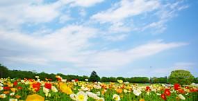 花の壁紙#95サムネイル
