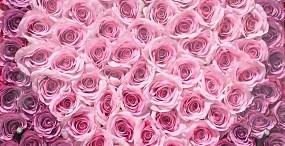 花の壁紙#97サムネイル