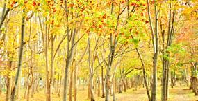 森林・草原の壁紙#102サムネイル