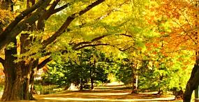 森林・草原の壁紙#104サムネイル