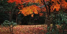 森林・草原の壁紙#106サムネイル