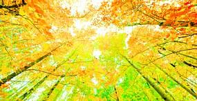 森林・草原の壁紙#113サムネイル