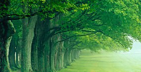 森林・草原の壁紙#2サムネイル