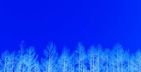 森林・草原の壁紙#31サムネイル