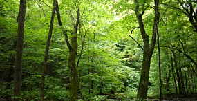 森林・草原の壁紙#32サムネイル
