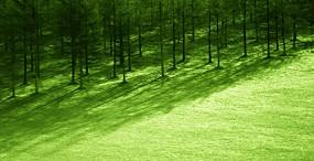 森林・草原の壁紙#34サムネイル