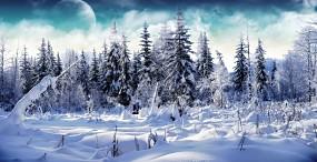 森林・草原の壁紙#4サムネイル