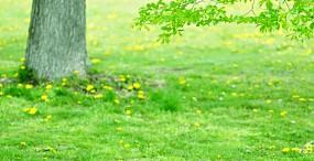 森林・草原の壁紙#40サムネイル