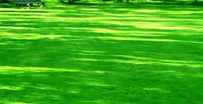 森林・草原の壁紙#42サムネイル