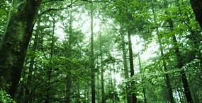 森林・草原の壁紙#44サムネイル