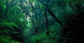 森林・草原の壁紙#47サムネイル