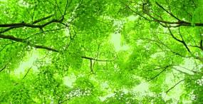 森林・草原の壁紙#55サムネイル