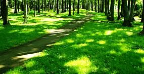 森林・草原の壁紙#56サムネイル