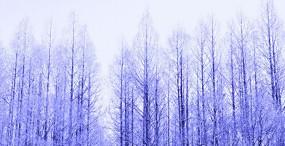 森林・草原の壁紙#60サムネイル