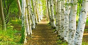 森林・草原の壁紙#63サムネイル