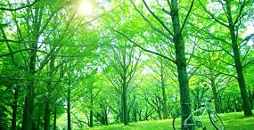 森林・草原の壁紙#66サムネイル