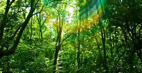 森林・草原の壁紙#69サムネイル
