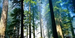 森林・草原の壁紙#7サムネイル