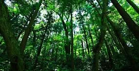 森林・草原の壁紙#73サムネイル
