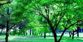 森林・草原の壁紙#90サムネイル