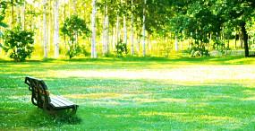 森林・草原の壁紙#93サムネイル